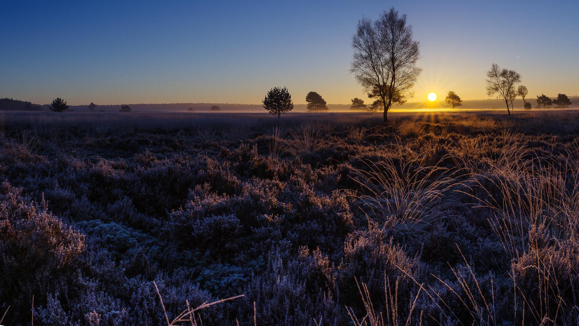 landschap, ochtendzon