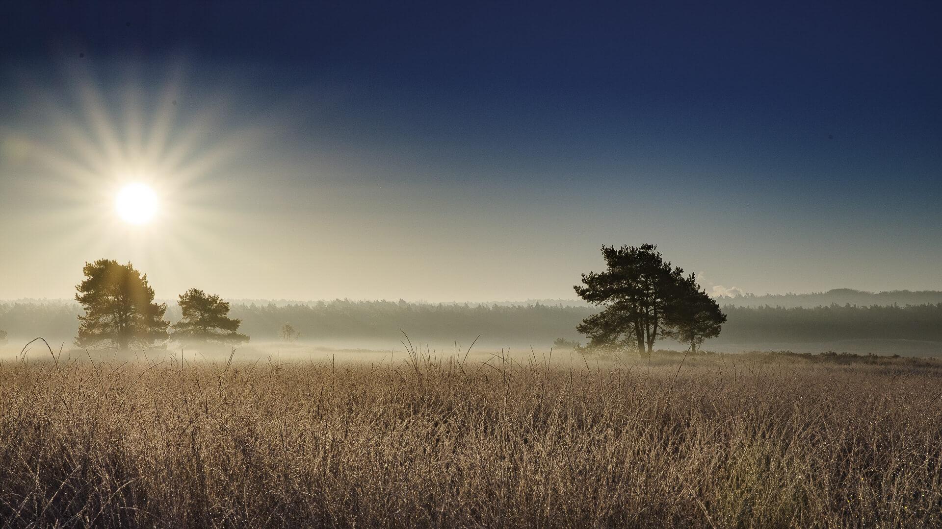 landschap, opkomende zon